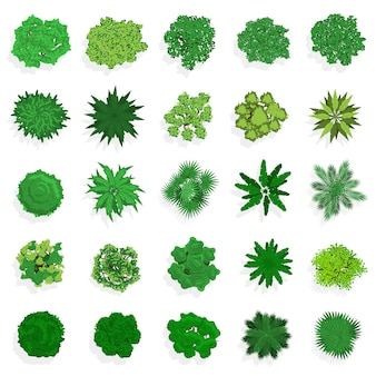Trees top view. green plants, bushes, shrubs and trees for landscape or architectural design