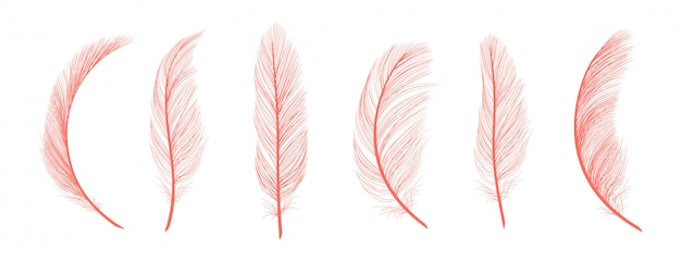 Trendy coral feathers. pink fallen feathers isolated on white background