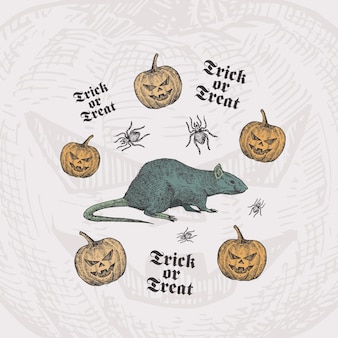 Trick or treat halloween card template with rat, pumpkins and spiders