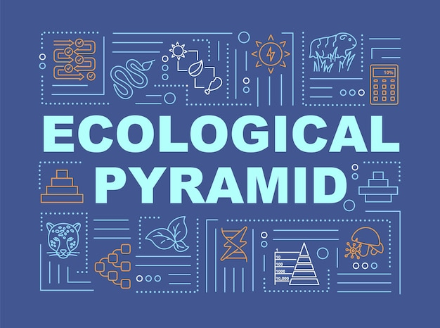 Trophic pyramid word concepts banner. biodiversity, producers and consumers population. infographics with linear icons on blue background. isolated typography. vector outline rgb color illustration