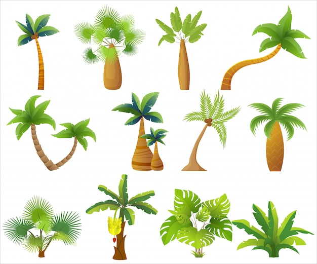 Tropic palm trees isolated.