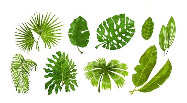 Тропические растения. монстера и листья пальмовых джунглей, зеленая экзотическая листва, ботаническая декоративная коллекция природы. векторная иллюстрация изолированных коллекция тропических листьев набор