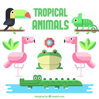 Tropical animal collection in flat design
