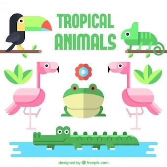평면 디자인의 열대 동물 컬렉션