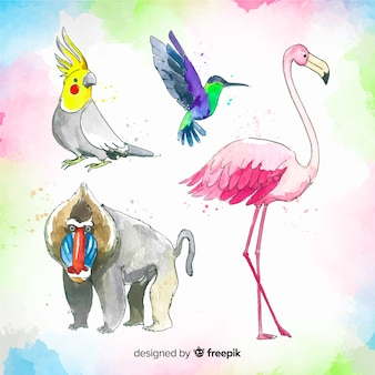 Tropical animal collection watercolor style