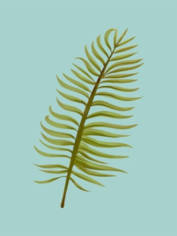 Tropical aroca palm leaf illustration