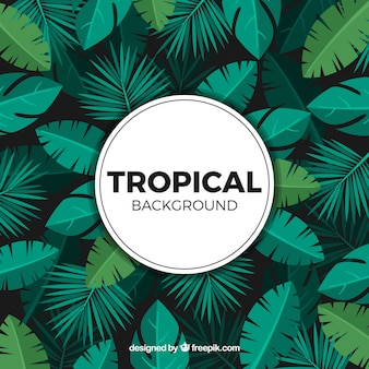 Tropical background with different plants