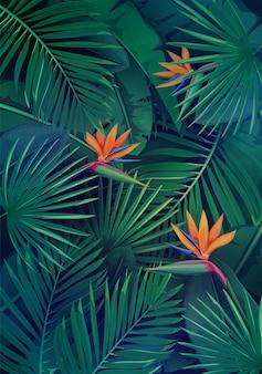 葉と花を持つ熱帯の背景。ジャングルエキゾチックストレチア、バナナの葉、フィロデンドロン、ビンロウジュのヤシ。