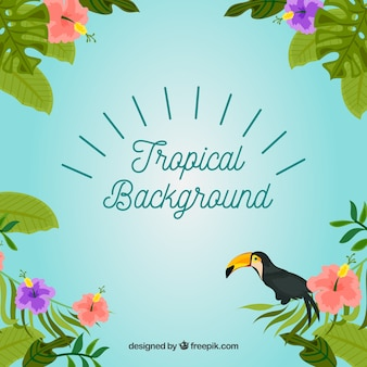 Tropical background with plants and toucan