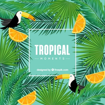 Tropical background with toucans