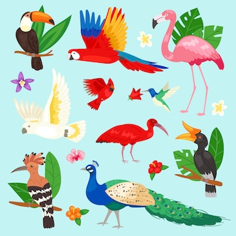 Tropical birds  exotic parrot or flamingo and peacock with palm leaves illustration