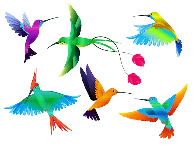 Tropical birds. hummingbirds toucan colored parrot exotic birds zoo cartoon vector collection