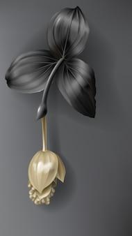 Tropical black and gold medinilla flower on dark