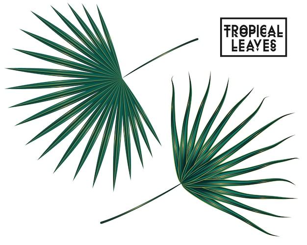 熱帯の枝、白い背景の上の葉、ヤシの木の葉の分離