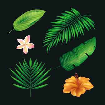 Collezione tropicale di fiori e foglie