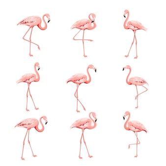 Tropical collection pink flamingos