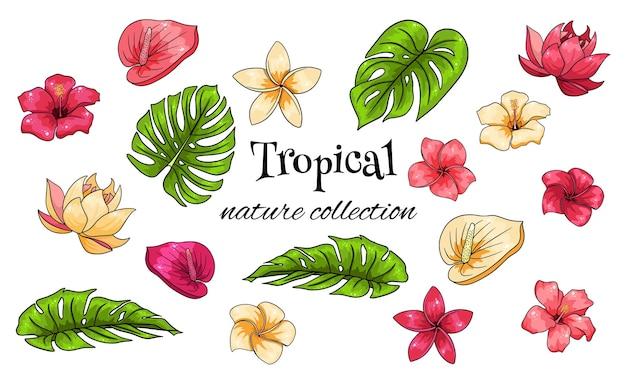 Тропическая коллекция с экзотическими цветами и резными листьями в мультяшном стиле.