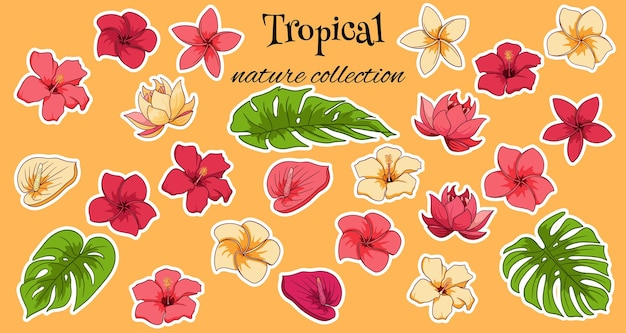 Tropical collection with exotic flowers and carved leaves in cartoon style. vector illustration for design isolated on white background.