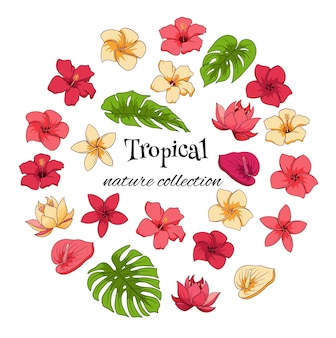 Tropical collection with exotic flowers and carved leaves in cartoon style.