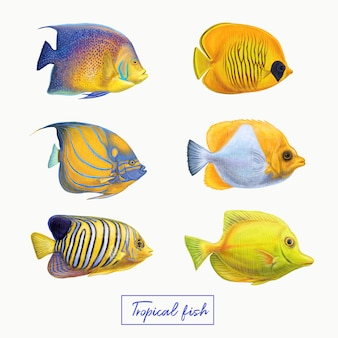 Tropical colorful fishes