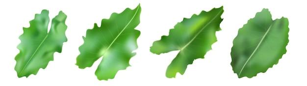 熱帯の装飾の葉は、白い背景で隔離を設定します。ベクトルイラスト