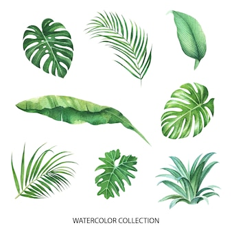 Tropical design with various leaves concept, vector illustration.