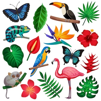 Tropical exotic icon set