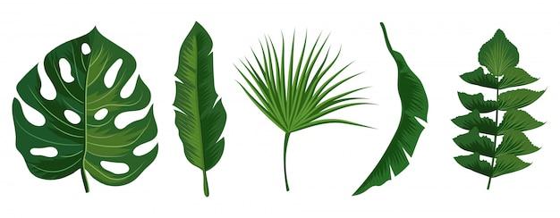 Тропические экзотические листья на белом фоне