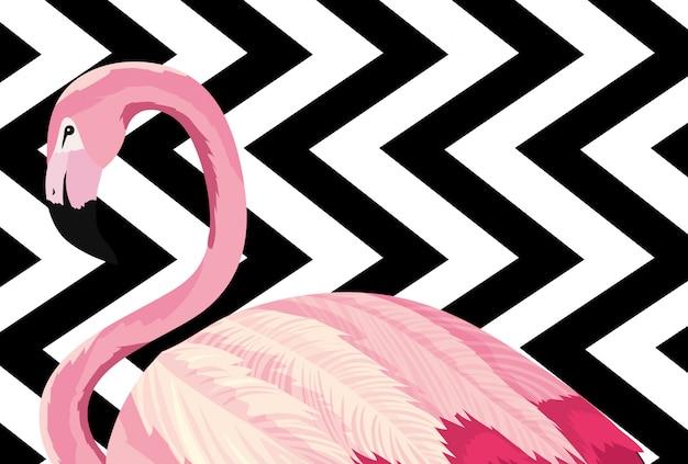 Tropical flamingo cartoon