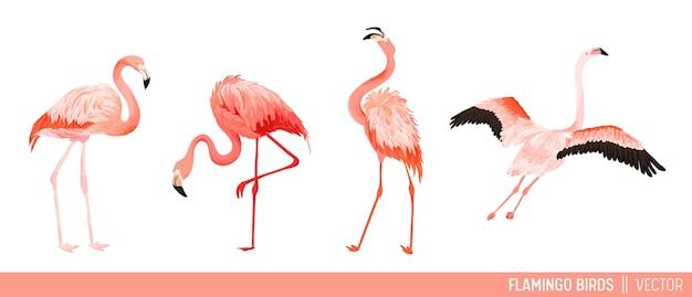 Коллекция тропических фламинго. набор тропиков и джунглей летом экзотических птиц декоративного дизайна. природа живая природа розовая птица. векторная иллюстрация