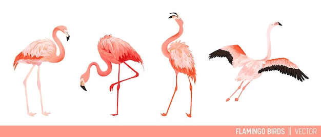 Tropical flamingo collection. set of tropic and jungle summer exotic birds decorative design. nature wildlife pink bird. vector illustration