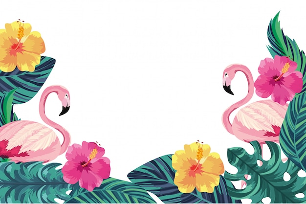 Tropical flamingos cartoon on white background