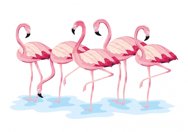 Tropical flamingos exotic wild animals