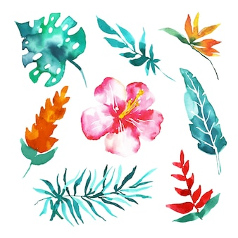 水彩で熱帯の花と葉のコレクション
