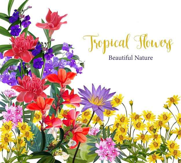 熱帯の花の背景