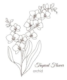 白で隔離される熱帯の花