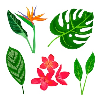 Tropical flower and leaf collection