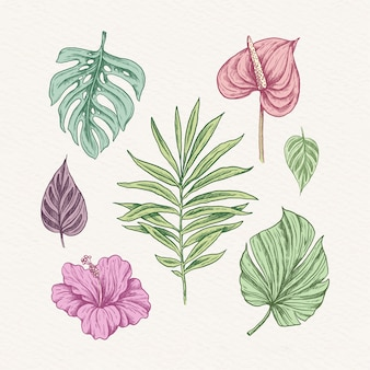 열 대 꽃과 나뭇잎 세트