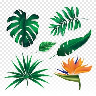 열 대 꽃과 잎