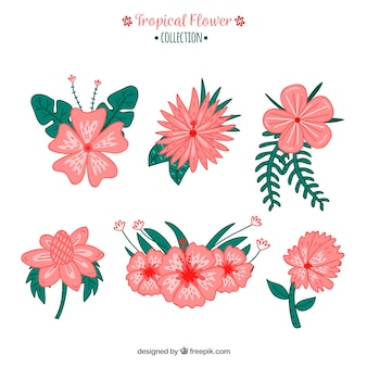 Disegnato a mano collezione di fiori tropicali