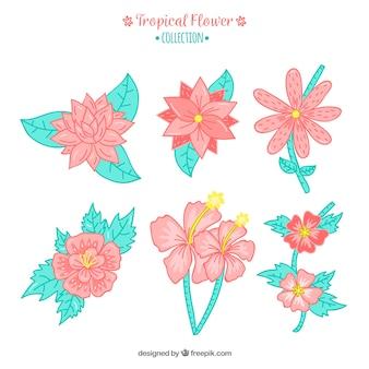 Коллекция тропических цветов в ручном стиле