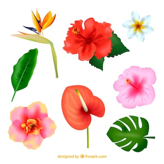 Tropical flowers collection in realistic style