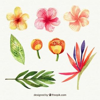 수채화 스타일에서 열 대 꽃 모음