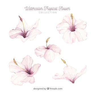 熱帯の花のコレクション水彩スタイルで