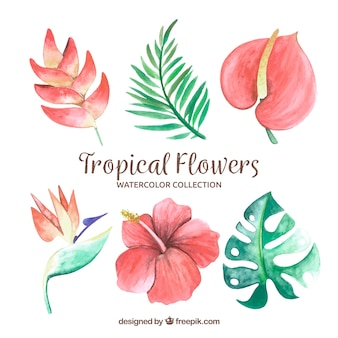 Tropical flowers collection in watercolor style