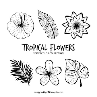 Tropical flowers collection in monolines