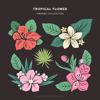 Tropical flowers collection with colors in vintage style