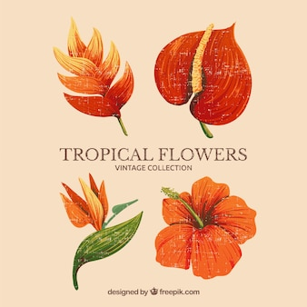 Tropical flowers collection with orange colors in vintage style