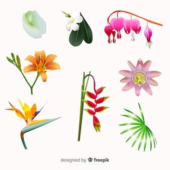 熱帯の花のコレクション