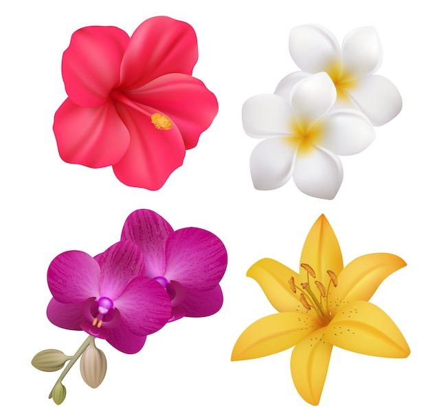 Tropical flowers. exotic nature plants floral realistic collection of polynesian flowers